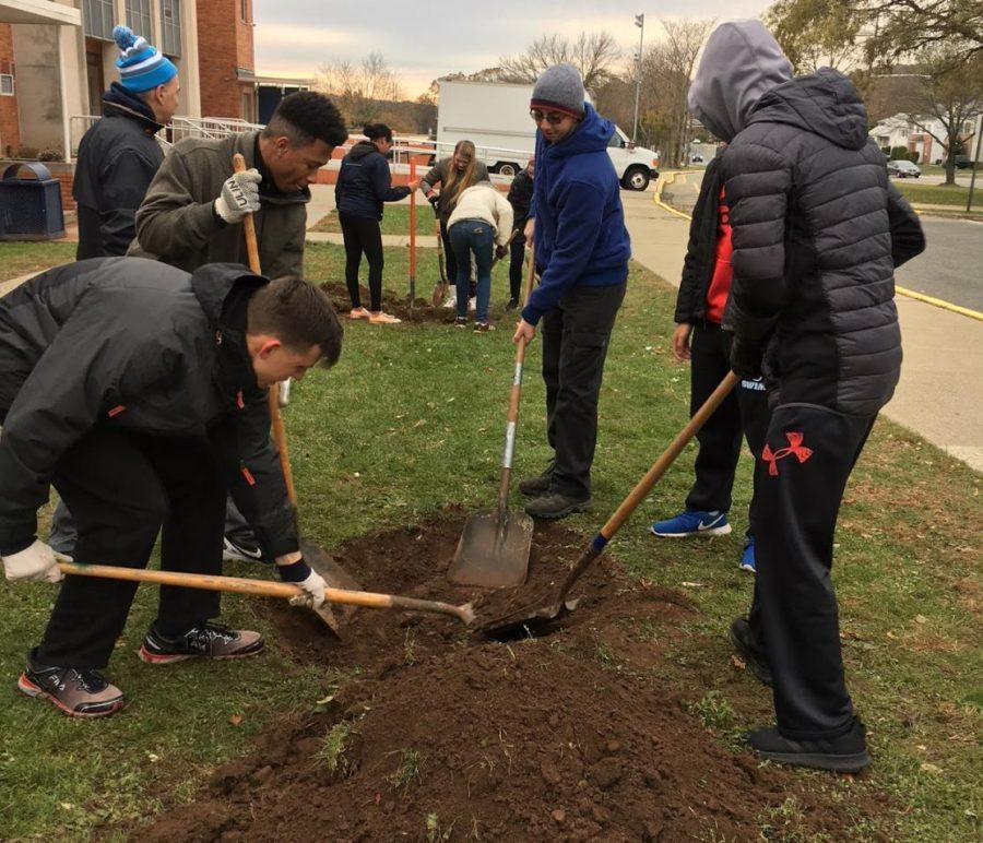 SNHS Tree Planting