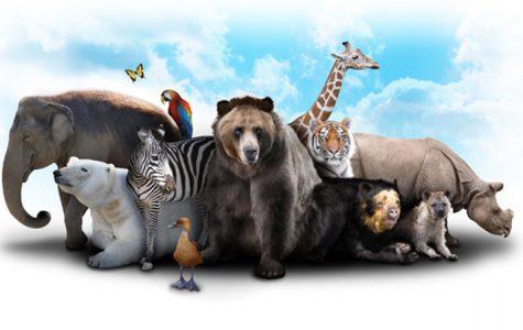 Addition of Animal Behavior at WOHS